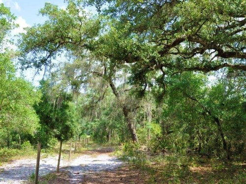 Groveland 42 Acres And Home : Groveland : Lake County : Florida