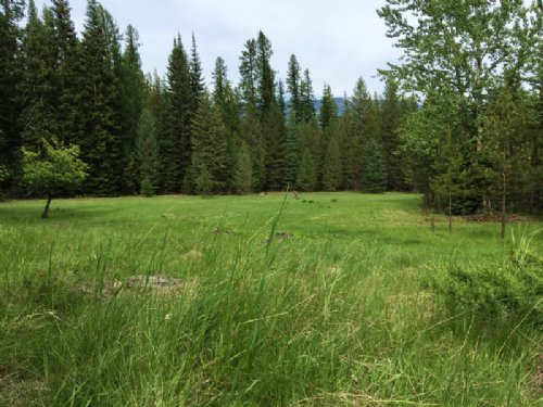 Stevens Creek Solitude : Noxon : Sanders County : Montana