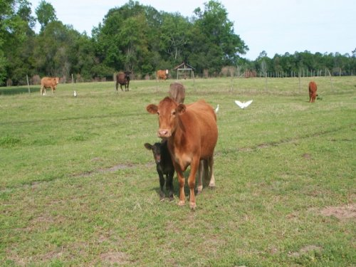 120 Acres, Perry Fl : Perry : Taylor County : Florida