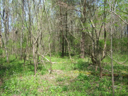Land - 26 Acres Near Lake Ontario : Sterling : Cayuga County : New York
