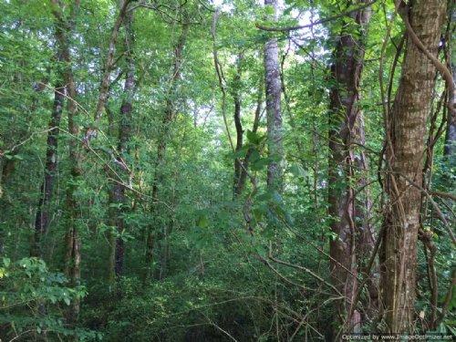 2.4± Ac Residential Lot : Waynesboro : Wayne County : Mississippi