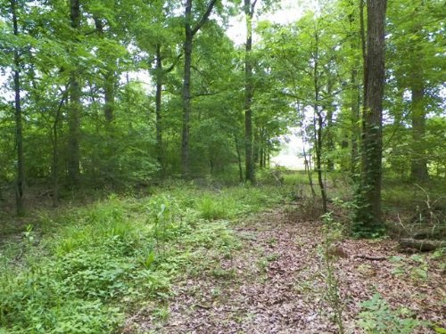 13+ Acres / 30534 : Broken Bow : McCurtain County : Oklahoma