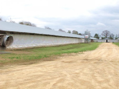 Poultry Breeder Farm For Sale Foxwo : Foxworth : Marion County : Mississippi