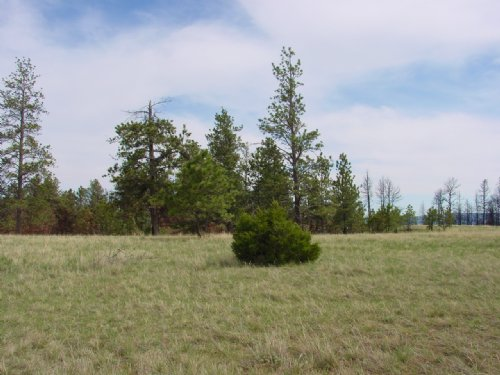 Wild Turkey Ridge : Columbus : Stillwater County : Montana