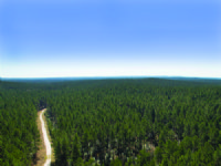 9,753 Acre Trinity Forest : Groveton : Trinity County : Texas