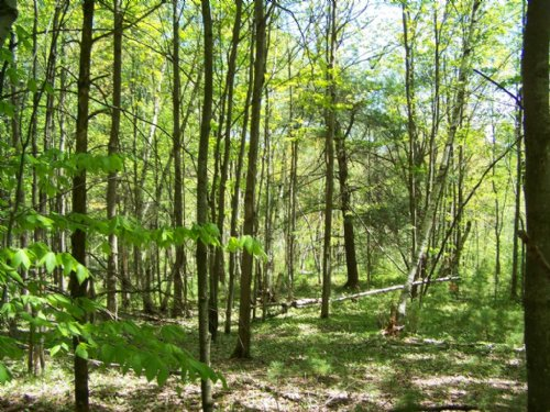 51 Acres Bordering State Forest : Croghan : Lewis County : New York