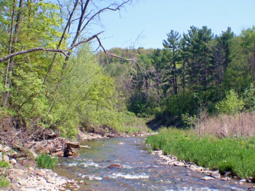 Timberland On Canaseraga Creek : Ossian : Allegany County : New York