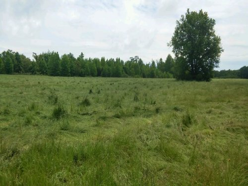 44 Acres With Subdivision Potential : Spotsylvania County : Virginia