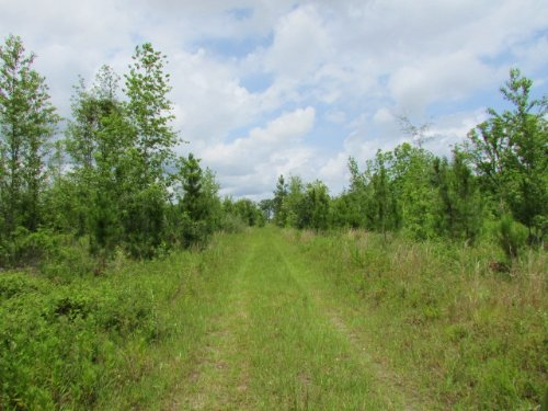 92 Acres : Pelham : Mitchell County : Georgia