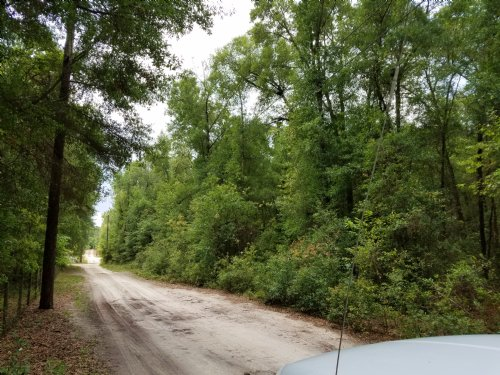 Secluded 5 Acre Lot $47,900 : Brooksville : Hernando County : Florida