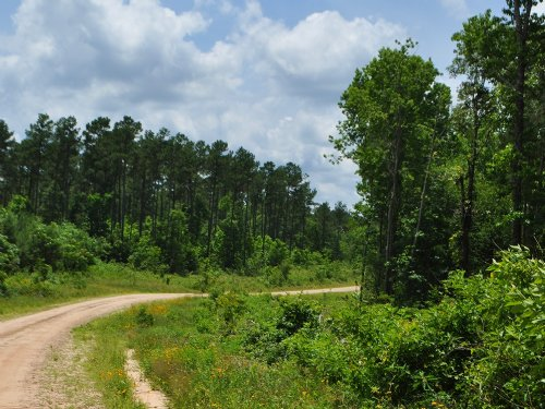 12 Ac Wilderness Rd. : Pointblank : San Jacinto County : Texas