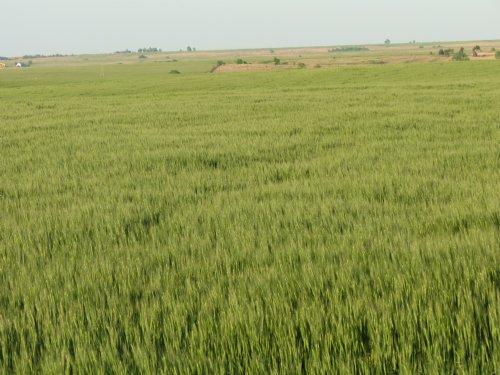 Pratt County 240 : Coats : Pratt County : Kansas