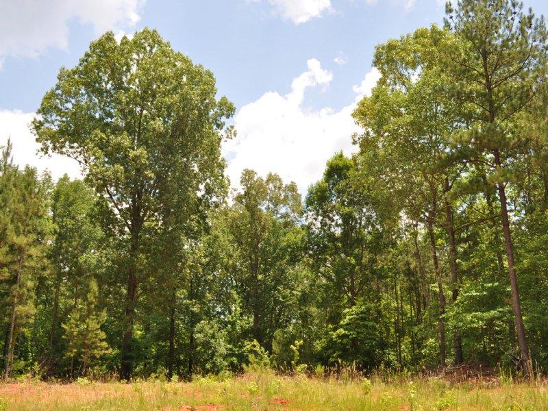 Shale Creek : Greensboro : Greene County : Georgia