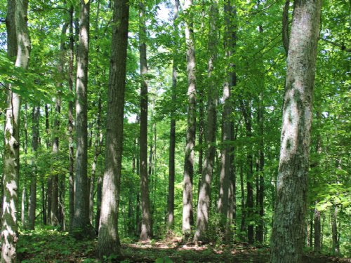 Buck Run Rd - 6.365 Acres : Albany : Meigs County : Ohio