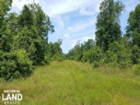 Recreation & Timber Investment With : Cleveland : San Jacinto County : Texas