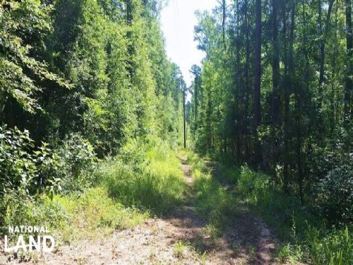 Hunter's Wooded Paradise : Coldspring : San Jacinto County : Texas
