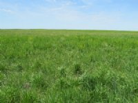 480+/- Acres : Gann Valley : Buffalo County : South Dakota
