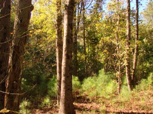 Price Reduced On 37 Acre Homesite : Ellaville : Schley County : Georgia
