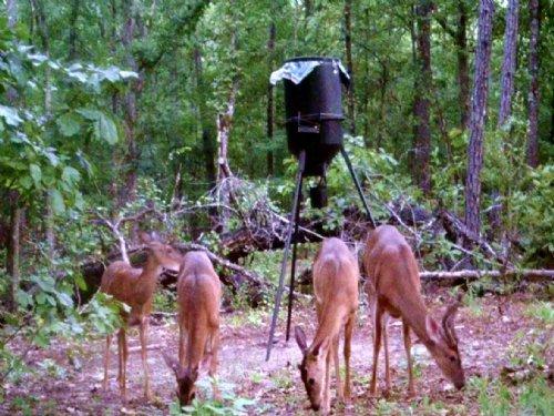 Quiet Neighborhood : Tallassee : Elmore County : Alabama