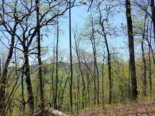 Ridgeline Lot In Wynngate : Dillard : Rabun County : Georgia
