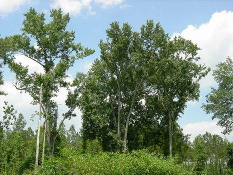16.457 Acres - New Survey : Swainsboro : Emanuel County : Georgia