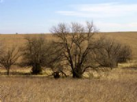 Cowboy Meadows Ranch Land Tract 22 : Caney : Chautauqua County : Kansas