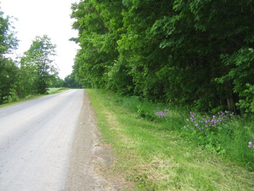 Wooded 6 Ac Building Lot With Pond : Trumansburg : Tompkins County : New York