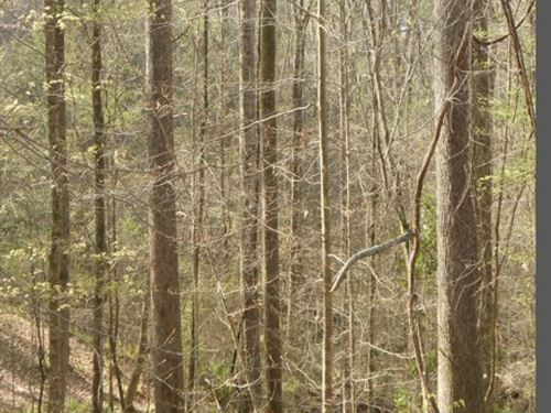 12 Acres In Pike County : Osyka : Pike County : Mississippi