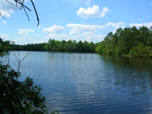 742 Acre Farm And Timber : Baxley : Appling County : Georgia