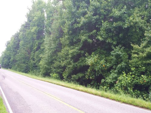 Nice Wooded Lot : Burkeville : Nottoway County : Virginia