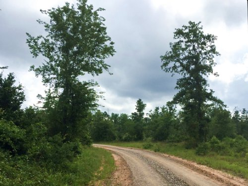 55 Acres Willow Springs Rd : Oakhurst : San Jacinto County : Texas