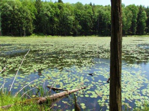 Building Lot Near Delaware River : Hancock : Delaware County : New York