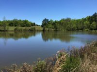 Two Ponds At Middleton Church Road : Elberton : Elbert County : Georgia