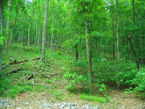 Large Corner Lot In Chelaque : Mooresburg : Hawkins County : Tennessee