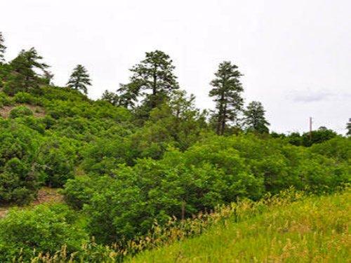 5.32 Acre Lot Near Pagosa Springs : Pagosa Springs : Archuleta County : Colorado