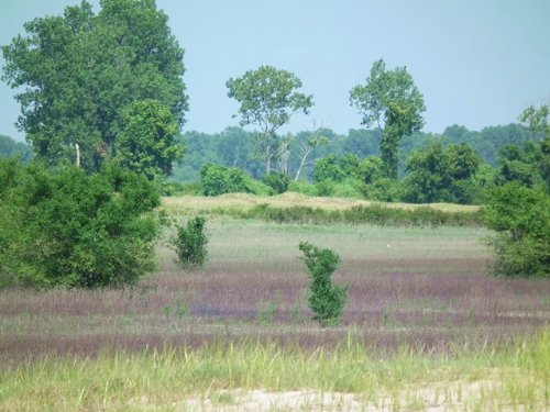 Cottonwood Bar : Mayersville : Issaquena County : Mississippi