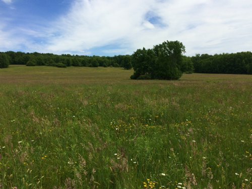 163 Ac Tillable Farmland - Pasture : Angelica : Allegany County : New York