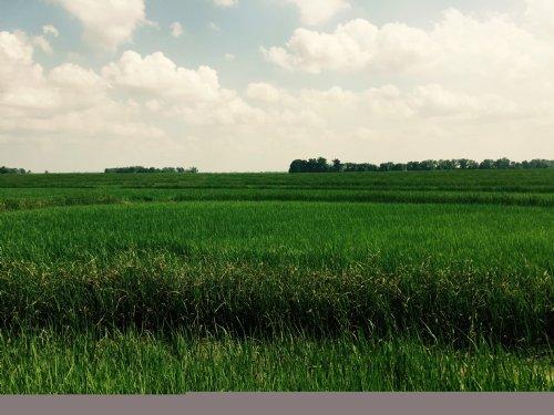 138 Acres +/- Farmland : Vanndale : Cross County : Arkansas