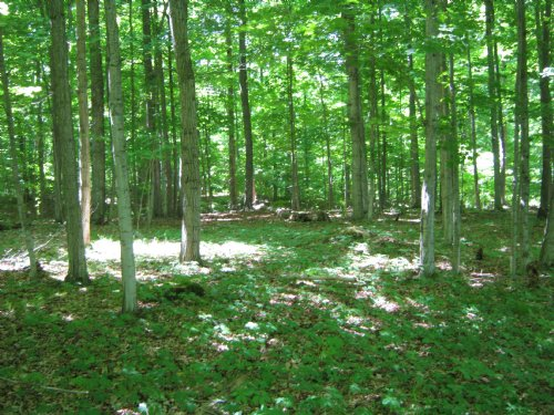 45 Acres In Ithaca With Financing : Ithaca : Tompkins County : New York