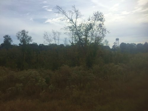 Hunting Land For Sale : Sturgis : Oktibbeha County : Mississippi