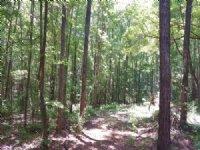 200 Acres Near Lake Martin : Camp Hill : Tallapoosa County : Alabama