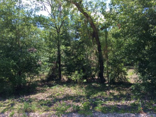 Wooded 1.32 Acres 772130 : Williston : Levy County : Florida