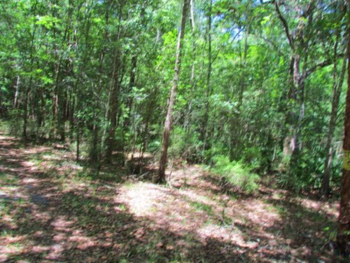 Riverfront Lots 21.56 Ac 772025 : Old Town : Dixie County : Florida