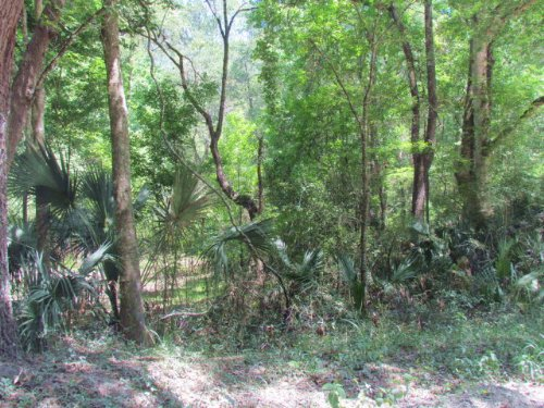 5 Acre Lot 771989 : Old Town : Dixie County : Florida