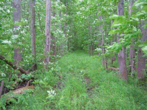 Hunting Land Near Montezuma Refuge : Montezuma : Cayuga County : New York
