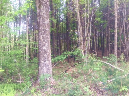 24.56+/- Acres With Spring : Dunlap : Sequatchie County : Tennessee