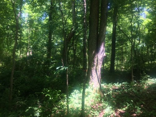 21.8+/- Acres Close To State Parks : Monteagle : Grundy County : Tennessee