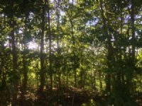 12.1+/- Acres Beautiful Bluff Views : South Pittsburg : Marion County : Tennessee
