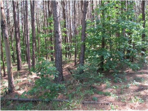 16 Acres In Webster County : Mathiston : Webster County : Mississippi