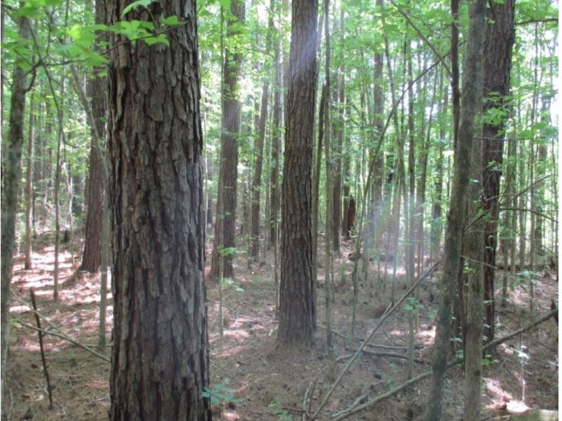 40 Acres In Webster County : Mathiston : Webster County : Mississippi